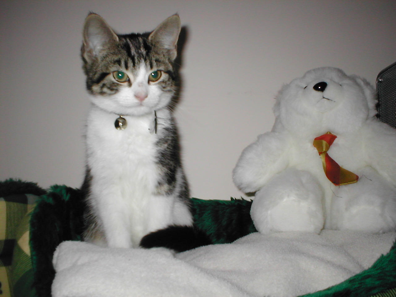 Kitten sitting upright on bed next to stuffed toy