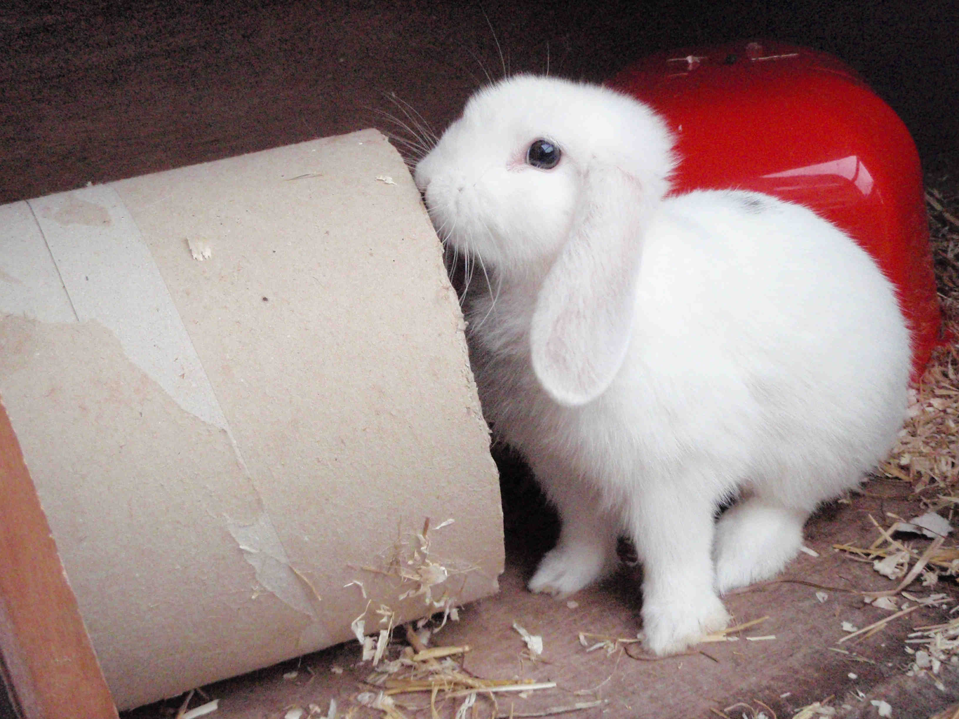 White rabbit sitting next to large cardboard tube